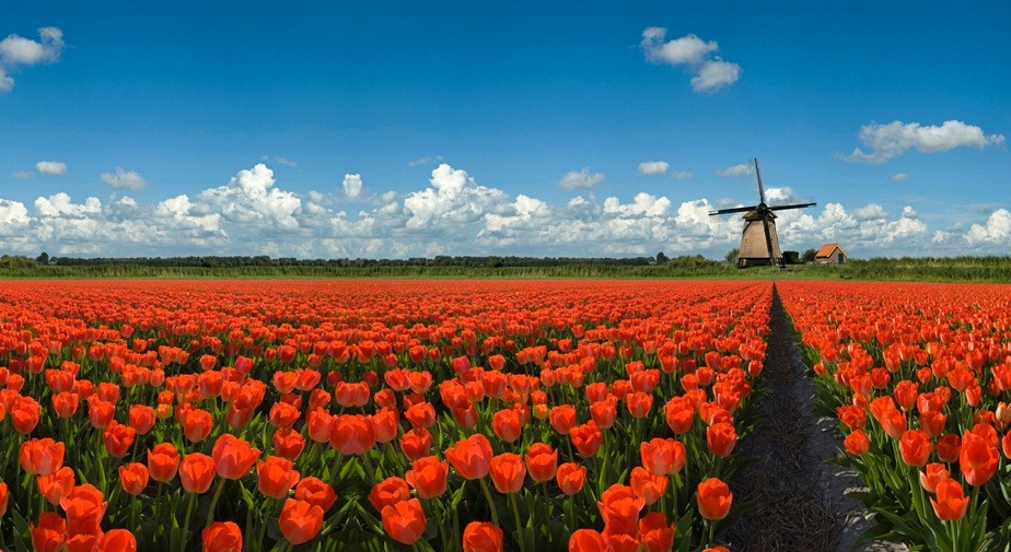 See Holland and do the Amsterdam city tour! Keukenhof Private Tour 2019 by Hans Langh