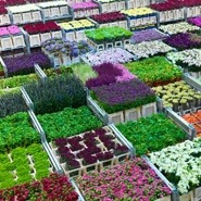 Aalsmeer Flower Auction: Flora Holland Private Tour from Amsterdam