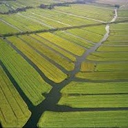 Holland Polderland: Holland Private Tour from Amsterdam
