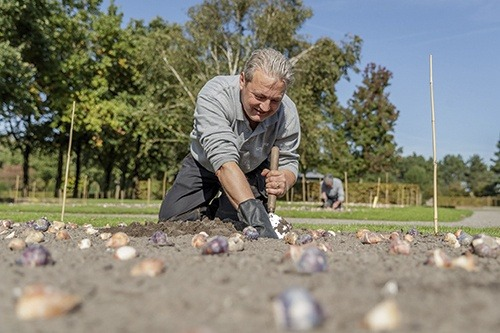 Planting tulips at Keukenhof